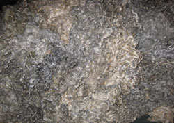 Gotland Fleece for sale